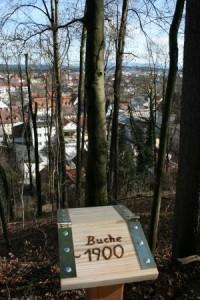 Bergwald, Paten, Baumalter